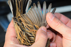 Controllo dell'uccello Immagini Stock