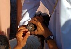 Controllo della salute di una capra Fotografia Stock Libera da Diritti