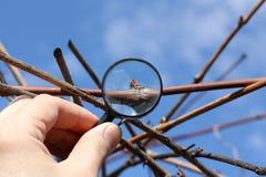 Controllo di ispezione della vigna Fotografia Stock Libera da Diritti