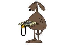 Controllo di sicurezza canino Fotografia Stock