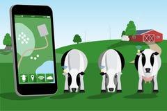 Controllo di un gregge delle mucche illustrazione di stock
