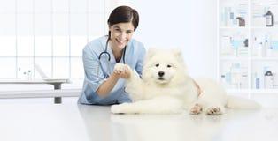 Controllo veterinario sorridente dell'esame veterinario del cane il ` s del cane fotografie stock