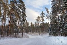 Contry road in a winter. Stock Photos