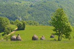 Contry side on the mountais. Beautiful view of the countryside, mountains and forests, the grass is collected for the winter use for the animals. Carpathian Stock Image