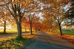 Contry Straße des Herbstes stockfotos