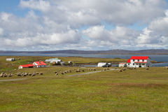 Contryside Falkland Islands. Contryside volunteer Point, Falkland Islands Royalty Free Stock Image