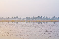 Contryside and swamp. In Thailand Royalty Free Stock Photo