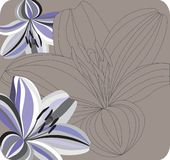 Contur of lilies on a background. Stock Photos