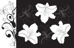 Contur van lelies op een zwarte achtergrond Stock Fotografie