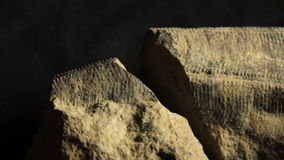 Conulariid Fossil geology rock stock footage