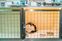 Convalescent cat in veterinary clinic. Gets treatnment and inpatient care Stock Photos