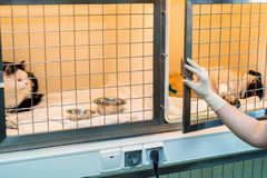 Convalescent pets in veterinary hospital Stock Photos