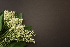 Convallária lilies-of-the-valley white on dark gray background royalty free stock image