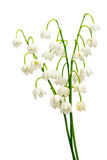 Convallaria majalis Royalty Free Stock Photography