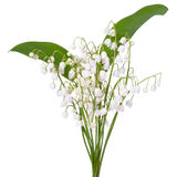 Convallaria majalis flowers. Bouquet isolated on white background Stock Photo