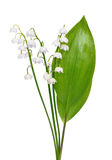 Convallaria majalis flowers Royalty Free Stock Photos