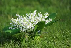 Convallaria bouquet on grass. Convallaria Majalis known also as Lily of the valley Royalty Free Stock Images