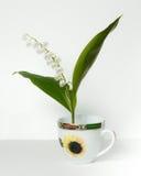 Convallaria majalis, Lily of the Valley, Stock Photo