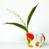 Convallaria majalis, Lily of the Valley, Stock Photos