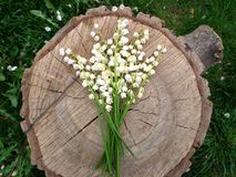 Convallaria and wood. Spring white flowers and wood royalty free stock photo