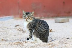 A convenient cat royalty free stock photos
