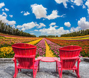 Convenient red chairs on flower meadow. The concept of eco-tourism. Rustic vacation. Convenient, comfortable red chairs on a flower meadow stock photos