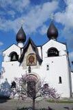 Convento di Marfo-Mariinsky di pietà a Mosca Ciliegio di fioritura Immagini Stock Libere da Diritti