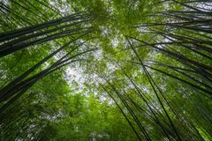 Convergence de bambou photo stock