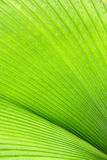 Convergent Greens Stock Image