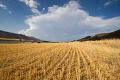 Converging, curving agricultural landscape. A landscape of curved converging parallel rows and large clouds overhead Stock Images
