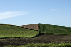Converging Fields in the Palouse Royalty Free Stock Image