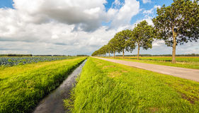 Converging lines in a Dutch polder landscape on a cloudy day Royalty Free Stock Photo