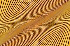 Converging lines of yellow planks. Abstract photo montage of yellow orange timber. Converging lines of planks Stock Photo