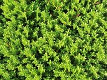 Conversão do jardim Fotografia de Stock Royalty Free