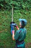Conversão do thuja do corte do jardineiro com tosquiadeiras da conversão Fotos de Stock