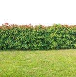 Conversão verde Imagem de Stock
