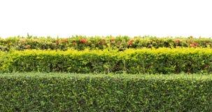 Conversão verde isolada Foto de Stock
