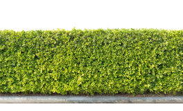 Conversão verde isolada Imagem de Stock