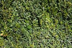 Conversão verde luxúria Fotos de Stock
