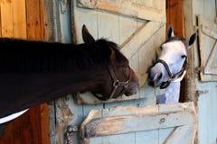 Conversa do cavalo Imagem de Stock Royalty Free