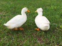 Conversa do pássaro Foto de Stock