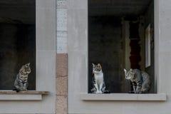 Conversa dos gatos Fotos de Stock Royalty Free