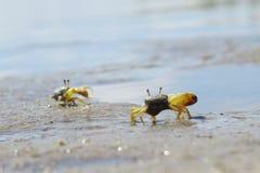 Conversation de crabe Image libre de droits