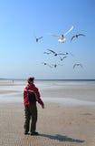 Conversation with gulls Stock Photos