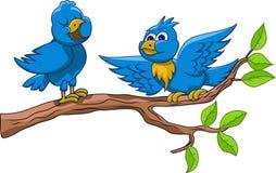 Conversation two blue birds Stock Photos