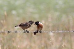 Conversazione degli uccelli Immagine Stock