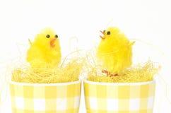 Conversazione dei polli Immagini Stock