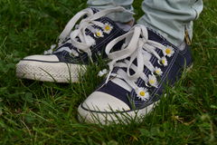 Converses with camomiles Stock Photography