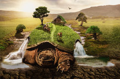 Conversion. Turtle slowly moves along the ground transforming the world around them Royalty Free Stock Photography