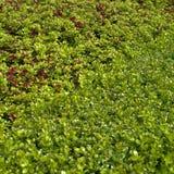 Conversão de florescência Foto de Stock